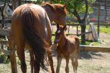 horses_heaven_vda_asar_virda_ice_3