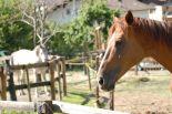 horses_heaven_vda_asar_virda_ice_5