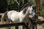 horses_heaven_vda_asar_virda_ice_6