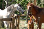 horses_heaven_vda_asar_virda_ice_8