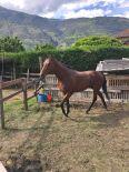 horses_heaven_vda_cavalli_star_1