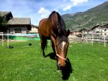 horses_heaven_vda_cavalli_vinnie_3
